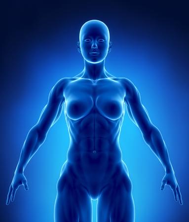 Muskulöse Frau Standard-Bild - 63181653