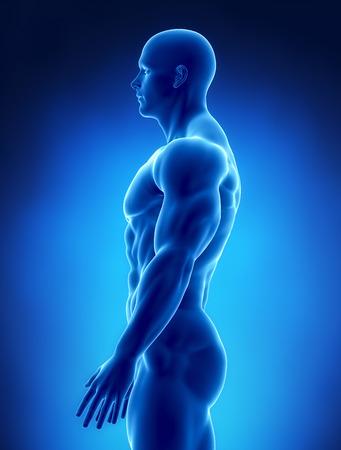 Muskuläre Konzept Röntgen Standard-Bild