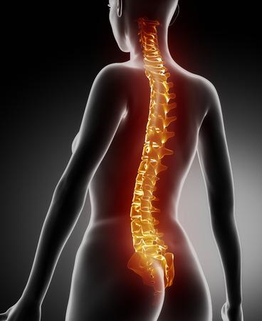 Female backbone anatomy photo