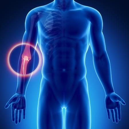 codo: Hombre codo anatom�a �sea Foto de archivo