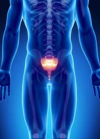 sacrum: Male bone anatomy sacrum