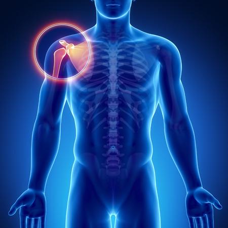 epaule douleur: Osseuse Homme articulation de l'�paule de l'anatomie