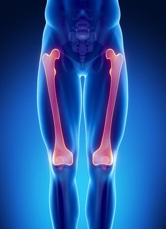 femur: Male bone anatomy femur
