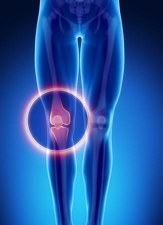 男性の骨の解剖学膝関節 写真素材