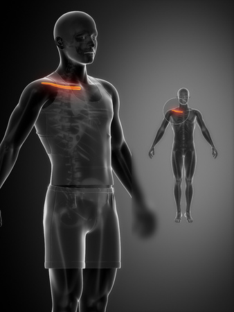 axial: Clavicle anatomy Stock Photo