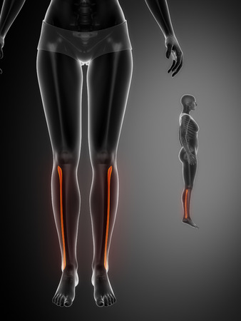 flexion: FIBULA black x--ray bone scan