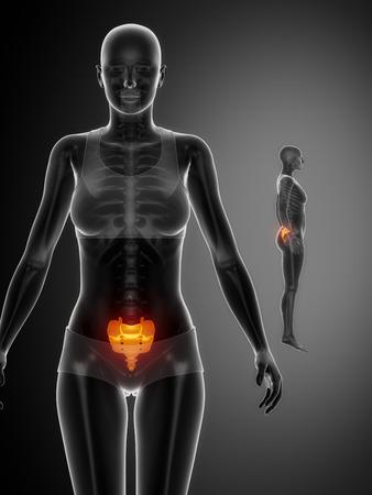 perineum: SACRUM black x--ray bone scan Stock Photo