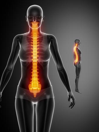 Halswirbelsäule Mit Bändern Und Nerven Rückenansicht Lizenzfreie ...
