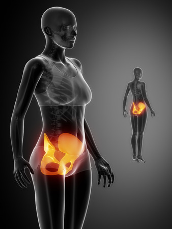 perineum: PELVIS black x--ray bone scan