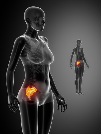 pubis: SACRUM black x--ray bone scan Stock Photo