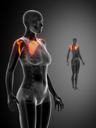 scapula: SCAPULA black x--ray bone scan Stock Photo