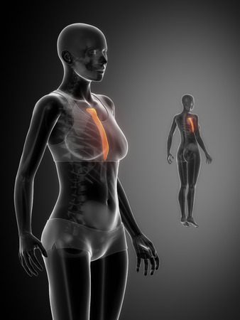 sternum: STERNUM black x--ray bone scan Stock Photo