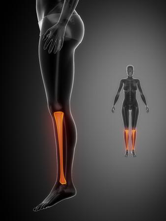 flexion: Tibia anatomy medical scan Stock Photo