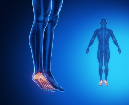 ankle: ANKLE bone anatomy x-ray scan Stock Photo