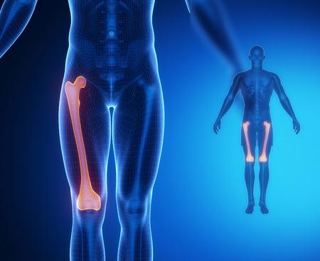 FEMUR bone anatomy x-ray scan Standard-Bild
