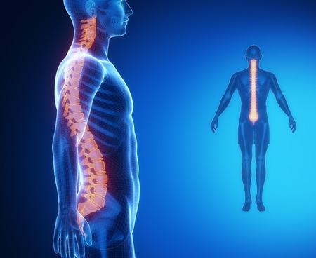 columna vertebral: Exploración de rayos X COLUMNA anatomía ósea Foto de archivo