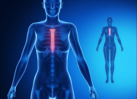 collarbone: STERNUM blue x--ray bone scan