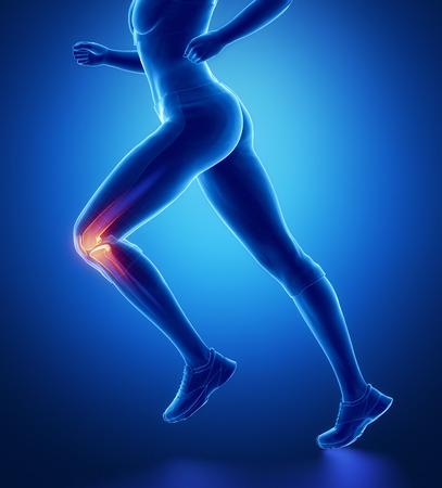 de rodillas: Anatomía de la rodilla Foto de archivo