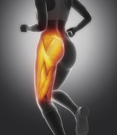허벅지 근육 여성의 해부학