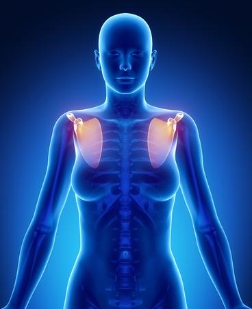 axial: SCAPULA blue x--ray bone scan