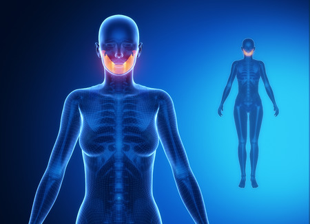 mandible: MANDIBLE blue x--ray bone scan