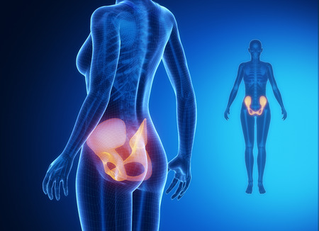 perineum: PELVIS blue x--ray bone scan