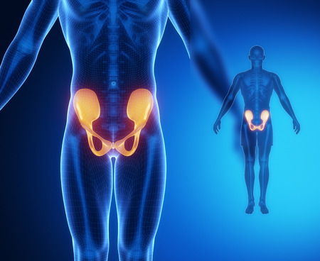 pubis: PELVIS bone anatomy x-ray scan