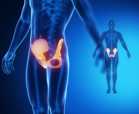 perineum: PELVIS bone anatomy x-ray scan