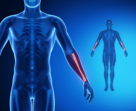 flail: RADIUS bone anatomy x-ray scan Stock Photo
