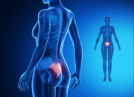 perineum: SACRUM blue x--ray bone scan Stock Photo
