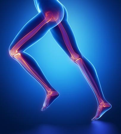 足の骨の解剖学に焦点を当ててください。 写真素材