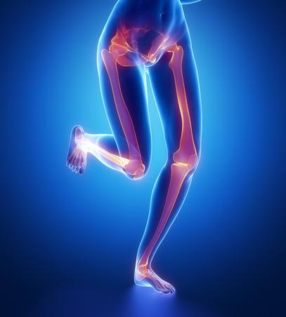 talus: Focused on leg bones anatomy