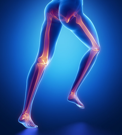 pubis: Focused on leg bones anatomy