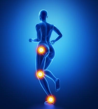pubis: Leg most injured regoins in sport - ankle,hip,knee
