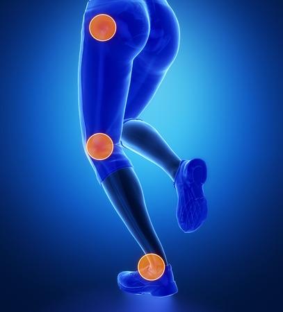 talus: Leg most injured regoins in sport - ankle,hip,knee