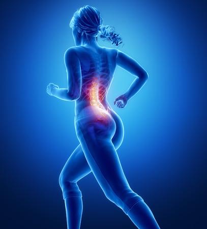 osteoporosis: Anatom�a de la rodilla Foto de archivo