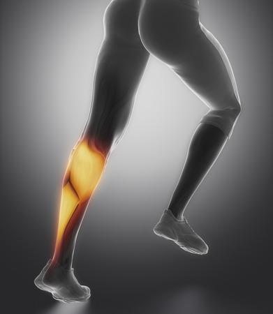 broken knee: Calves muscle anatomy