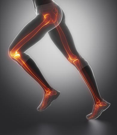 articulaciones: Centrado en los huesos de la pierna anatomía