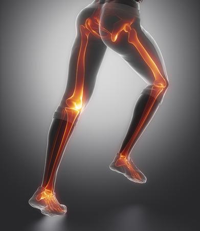 Centrado en los huesos de la pierna anatomía Foto de archivo - 38934859