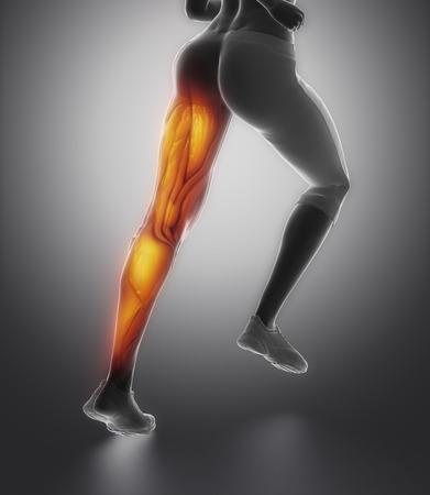 LEg female muscle anatomy back view