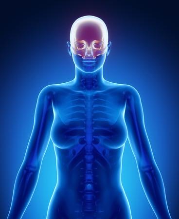 axial: CRANIUM blue x--ray bone scan