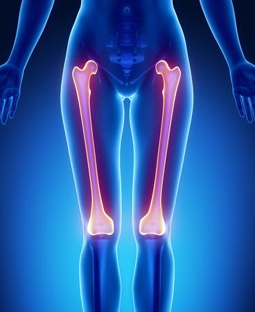 flexion: FEMUR blue x--ray bone scan