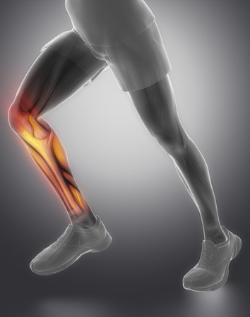 gastrocnemius: Calves muscle anatomy