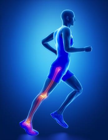 Leg joint anatomy