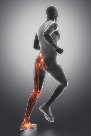 broken knee: Leg joints anatomy