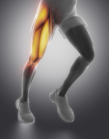 Thigh muscle anatomy Stock Photo