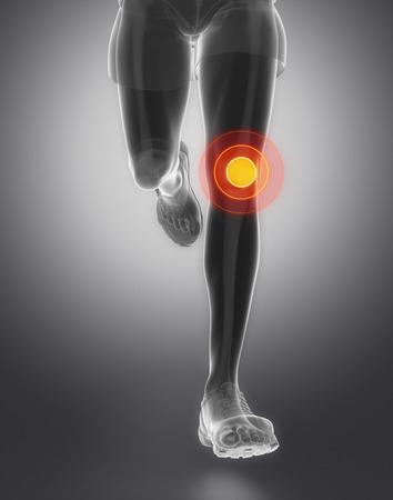 flexion: Knee anatomy
