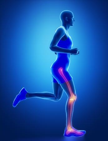 broken knee: Leg joint anatomy