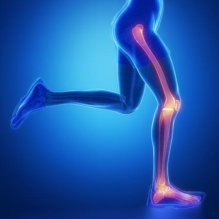 flail: Leg joint anatomy