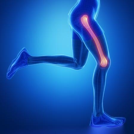 femur: FEMUR - running man leg scan in blue